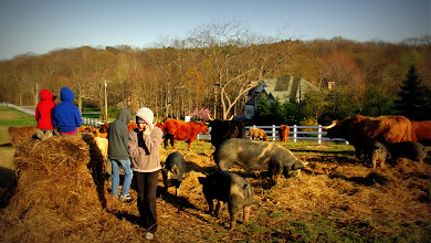 Photo: People, Pigs, & Cattle enjoy a sunny afternoon in the Winter Paddock