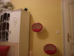 Photo: Sammy ist damit einverstanden (Schlafzimmer)