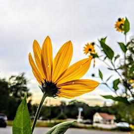 by Michelle Kelly - Flowers Single Flower