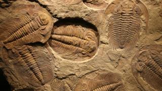 imagen de fósiles