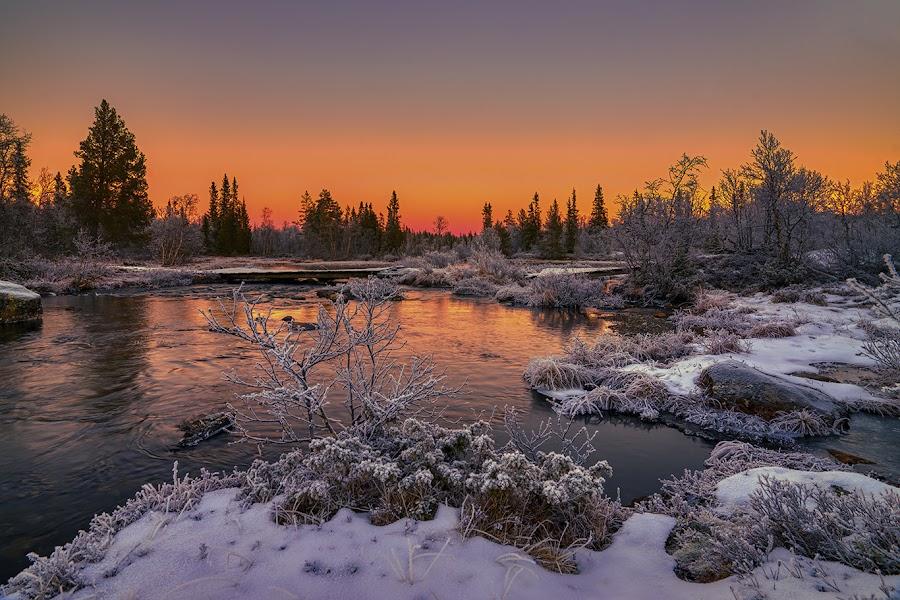 Red Sunset by John Aavitsland - Landscapes Sunsets & Sunrises ( red, 2018, sunset, norway, winter, river )