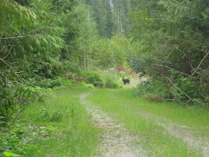Photo: Bear near Uchuck Lake