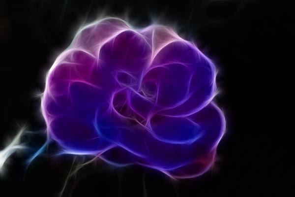 Anche i fiori hanno un'aura di mauro_zoboli