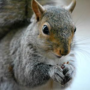 pixsquirrel.jpg