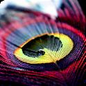 Beautiful Feather Theme icon