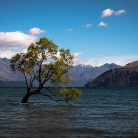 Lonely tree by Martina Frnčová - Landscapes Waterscapes ( blue sky, tree, wanaka, mountain range, lonely, lake,  )