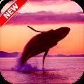 Whale Wallpaper HD 🐋 APK