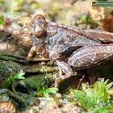Ground-grasshopper
