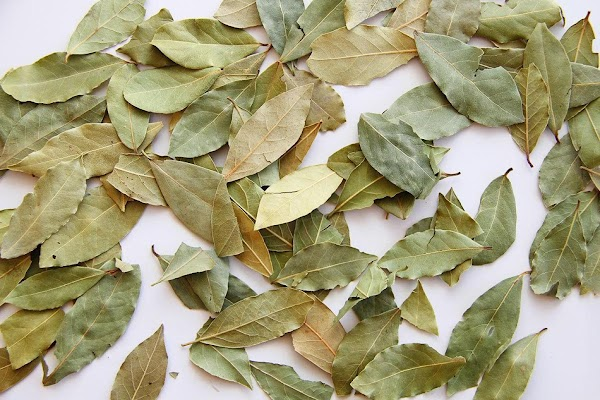Bay LeafThe bay tree is indigenous to Asia Minor, from where it spread to...
