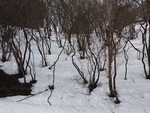 雪の斜面を登りショートカット