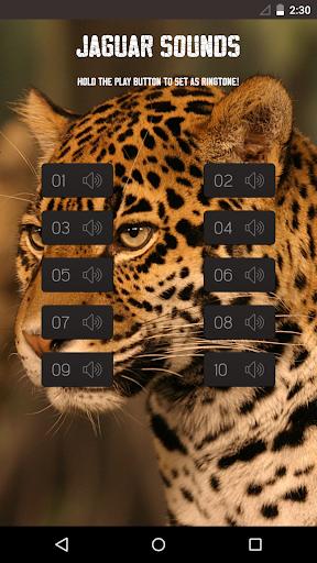 Jaguar Sounds