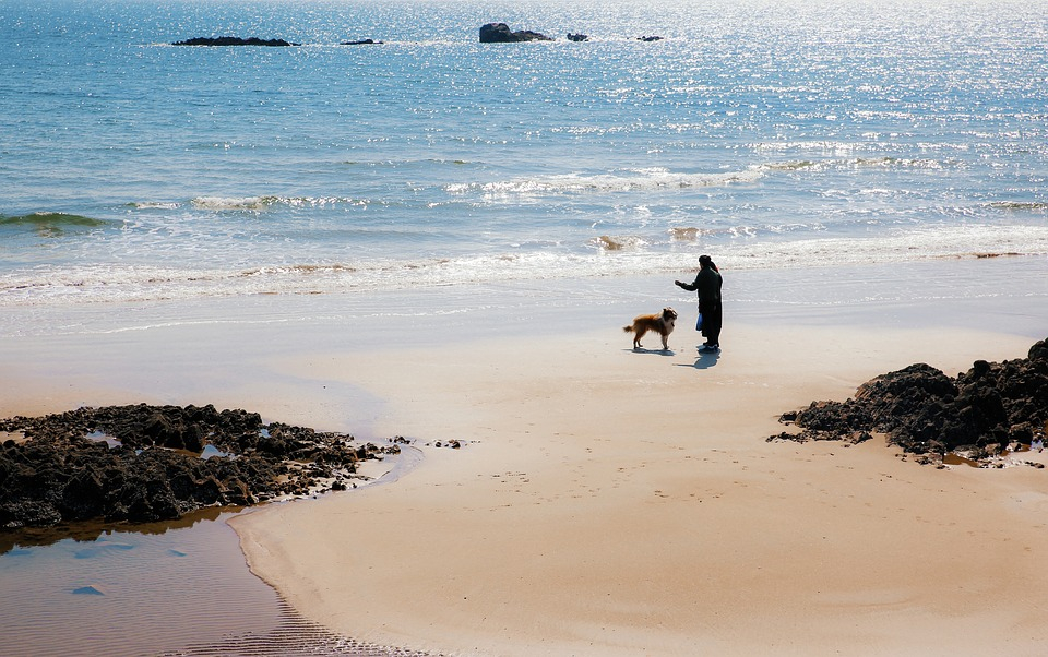 Beach, Dog, Marine, Blue, Training, Morning, Pets