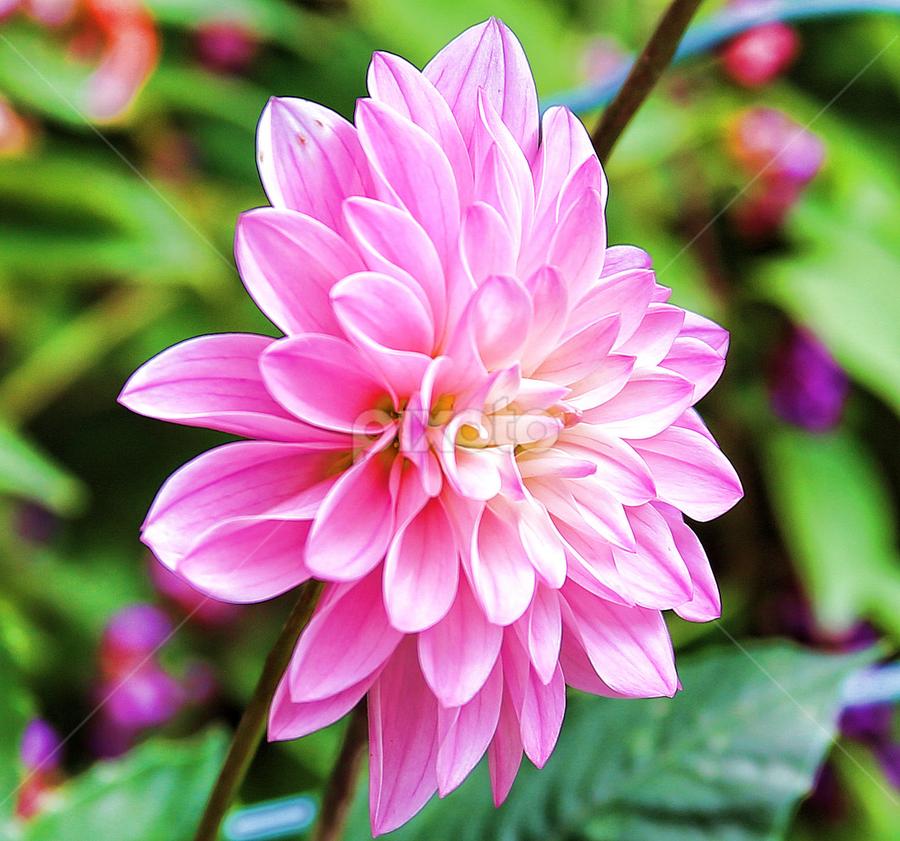 by Cynthia Lynn - Nature Up Close Flowers - 2011-2013