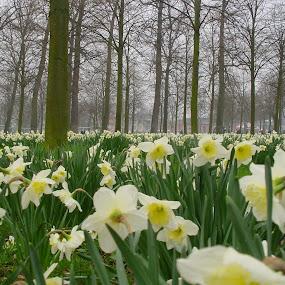 by Kris Van den Bossche - Flowers Flower Gardens (  )