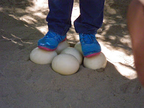 Photo: Tough egg to crack