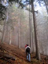 Photo: Zunächst über eine Forststraße und danach auf einem schönen, unmarkierten, sehr steilen Steig zunächst durch Wald aufwärts.