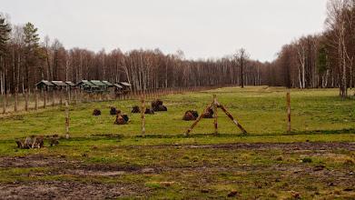 Photo: Pašilių stumbrynas