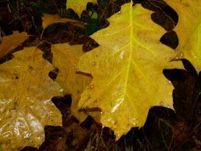 Photo: zo mooi is de herfst
