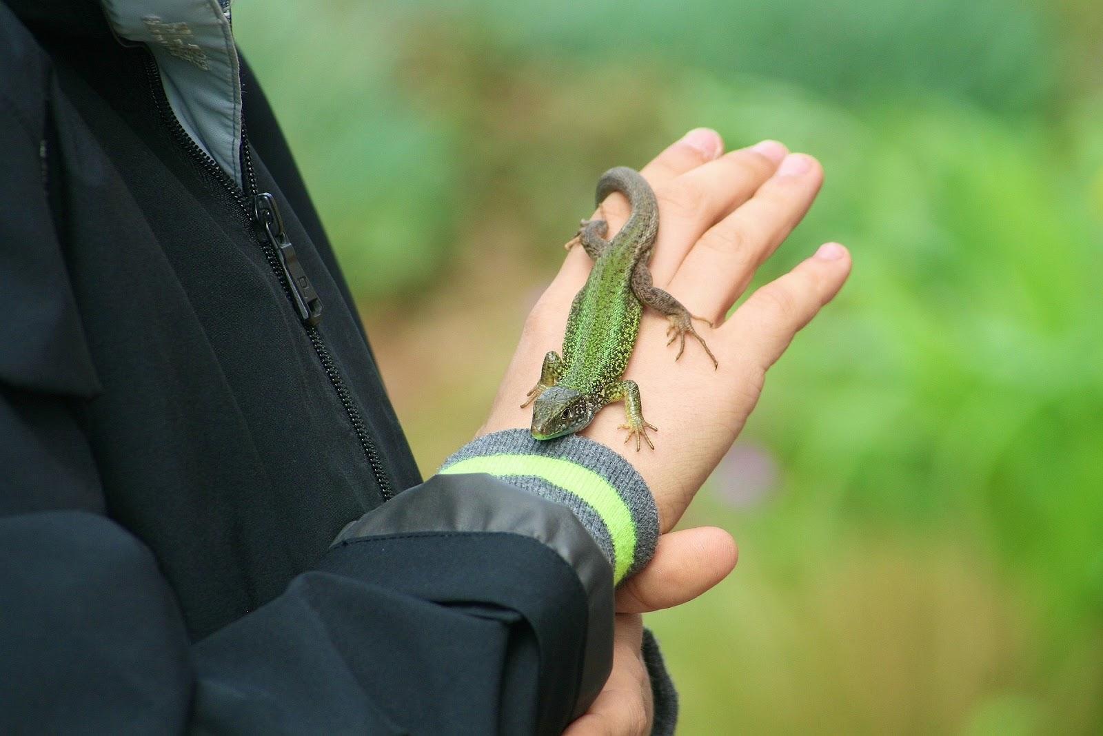 Kid with lizard on hand