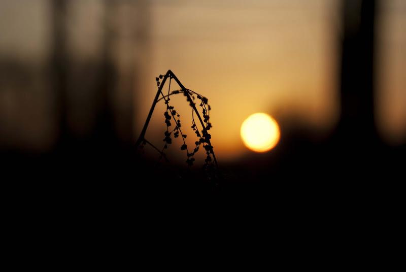 Ci dispiace, la tua ricerca è tramontata. di Martina Bonas