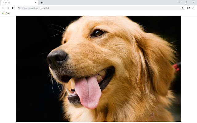 Golden Retriever Wallpapers and New Tab