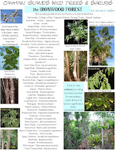 Photo: Ironwood Forest, SE of George Town, Grand Cayman, a list of some of the species growing there.