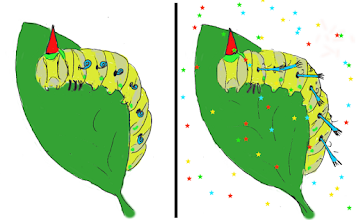 Photo: Keith's Caterpillar will one day undergo a spiraculous transformation.