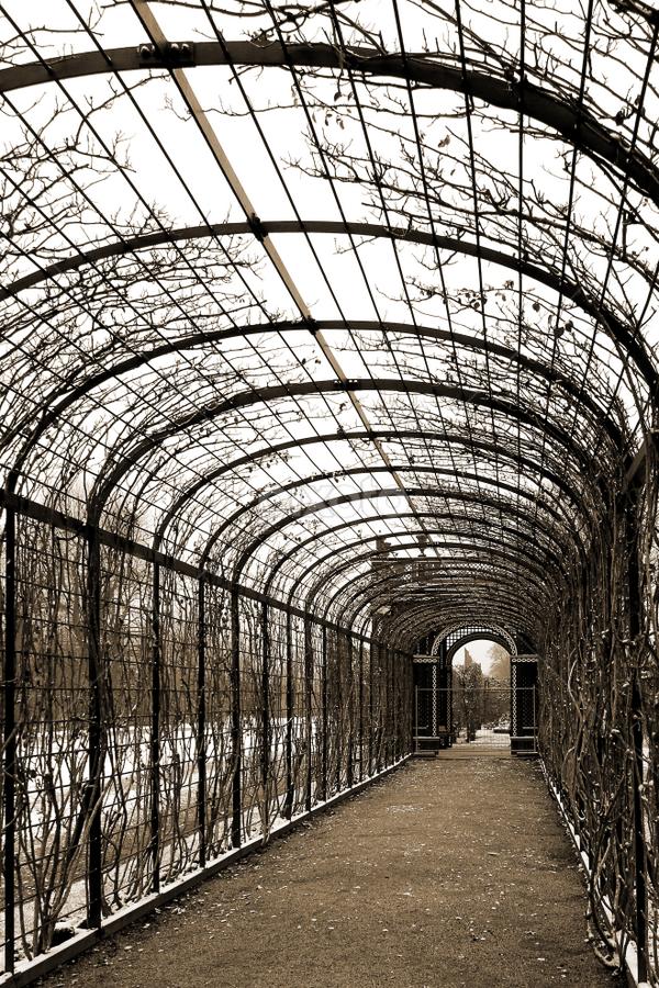flower tunnel by Miha Ajtnik - City,  Street & Park  City Parks ( old, winter, park, flower, tunnel )