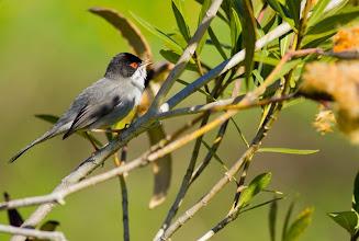 """Photo: Conferencia """"Identificación de las aves por sus cantos"""". Por Carlos Molina (SEO/BirdLife)"""