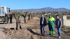 Alcalde y concejal visitan la zona de la Vía Verde donde se plantan una parte de los olivos.