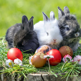 Happy easter by Marius Turc - Public Holidays Easter