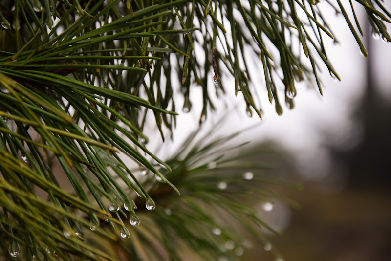 una giornata piovosa  di DiegoCattel