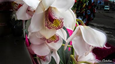 Photo: Orhidee - expusa spre vanzare pe Calea Victoriei - 2014.11.01 album http://ana-maria-catalina.blogspot.ro/2016/07/orhidee-orchidaceae.html