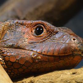 by Manuela Dedić - Animals Reptiles