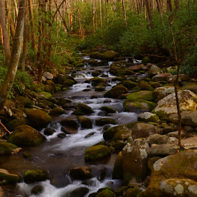 Mountain Stream by Beth Collins - Landscapes Forests ( water, stream, mountain, park, motor nature trail, moss, forest, landscape, mountain stream, moss covered rocks, national park, nature, trail, trees, rocks, natural,  )