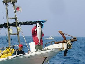 """Photo: 向こうのお船の""""かんぱち""""です! 釣ったのは、うちにもご乗船頂いてます「山田さん」! 魚持っているのは、ハッスル!ハッスル!の「T内さん」 ! 12kgあったそうです!"""