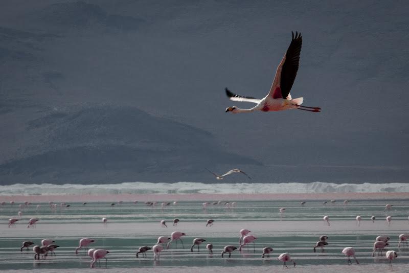 Pink flamingos di Antonio Raciti