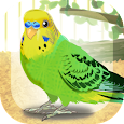 Parakeet Pet icon