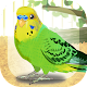 Parakeet Pet (game)