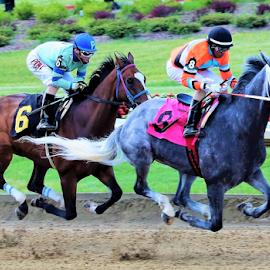 Flying Horses! by Paul S. DeGarmo - Sports & Fitness Running ( flying, horses, ground, off, legs,  )
