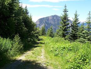 Photo: Logging road near Duffey Lake Road