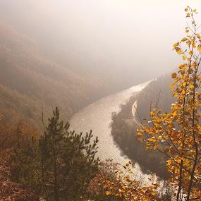 Autumn river by Martina Frnčová - Landscapes Forests ( nature, river, autumn, forrest, trees, colours,  )