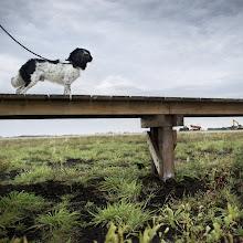 Photo: Slochteren, 21-08-2014, natuurontwikkeling Dannemeer , staatsbosbeheer , Denemarken.