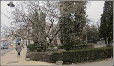 Photo: Spatiul verde din fata Catedralei Ortodoxe, magnolie - 2017.11.21