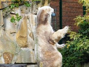 Photo: ... dann zeigt Knut seine wahre Groesse :-)