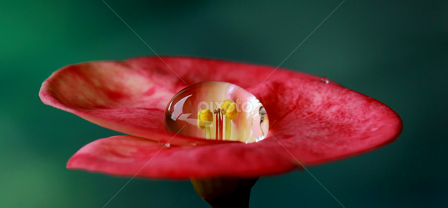 Single Dew by Farid Wazdi - Nature Up Close Water