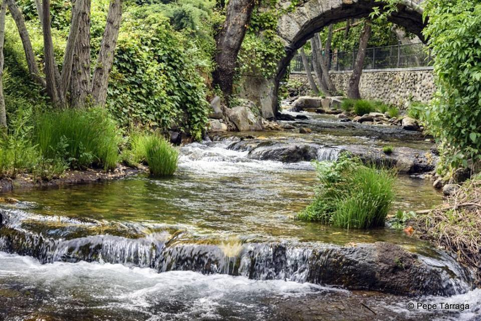 La imagen puede contener: planta, árbol, puente, exterior, naturaleza y agua