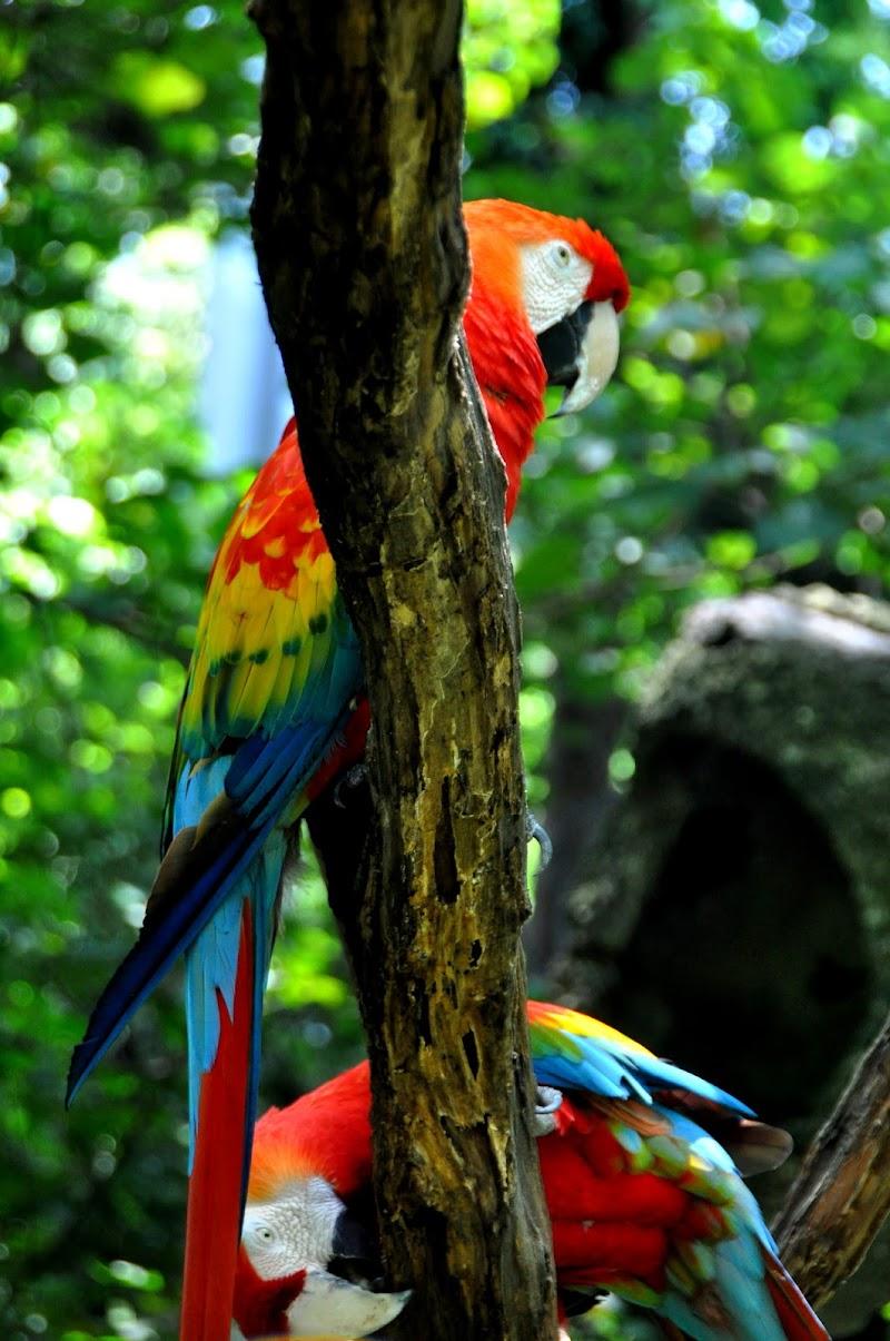 Papagayos. di SeleneNic
