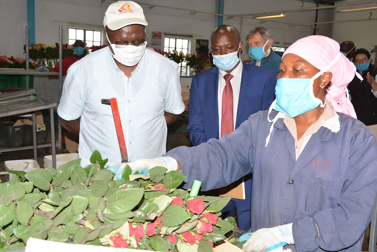Labour CS Simon Chelugui and CEO of AEA Wesley Siele tours Ol Njorowa flower farm in Naivasha