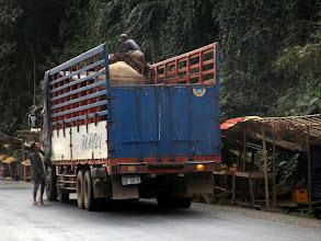 Photo: Ein Elefant im LKW. Er bleibt vorerst auch der Einzige, den wir zu Gesicht bekommen.